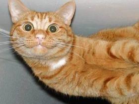 cat08013111076