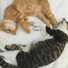 石田ゆり子の猫の画像