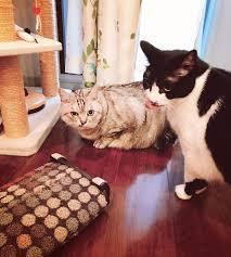室伏由佳の猫の画像