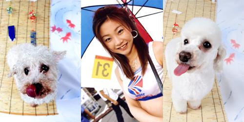 小川晃代のレースクイーン画像